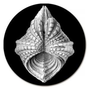 sottopiatti e paralumi artigianali   La Corallina Firenze